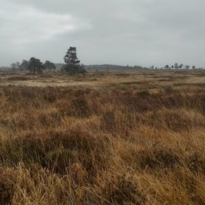 Trekking in the moors and swamps of the Ardennes mespetershellip